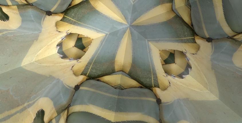 Sukkulente durch ein Kaleidoskop betrachtet